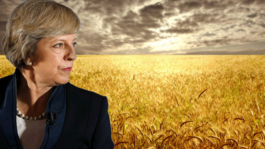 theresa wheat2 theresa may becomes meme sensation after admitting her naughty wheat
